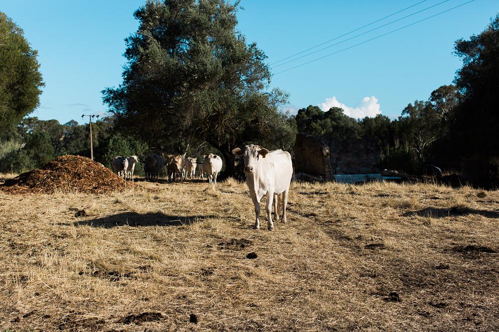 North Adelaide Al Ru Farm Wedding 48.jpg