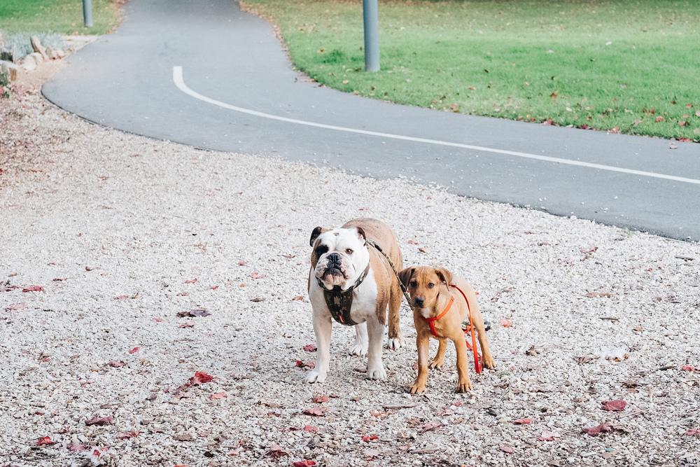family-dog-baby-photography-adelaide-garden-16.jpg