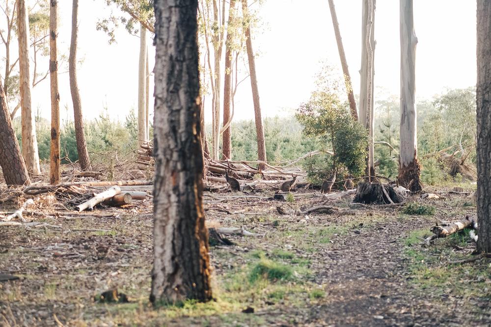 Kuitpo Forest Engagement Session 13.jpg