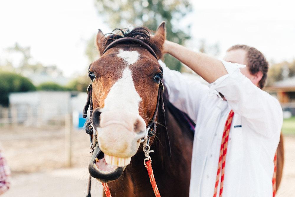 Bridal Portraits Horses 010.jpg
