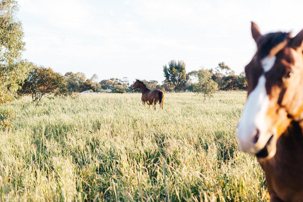 Bridal Portraits Horses 026.jpg