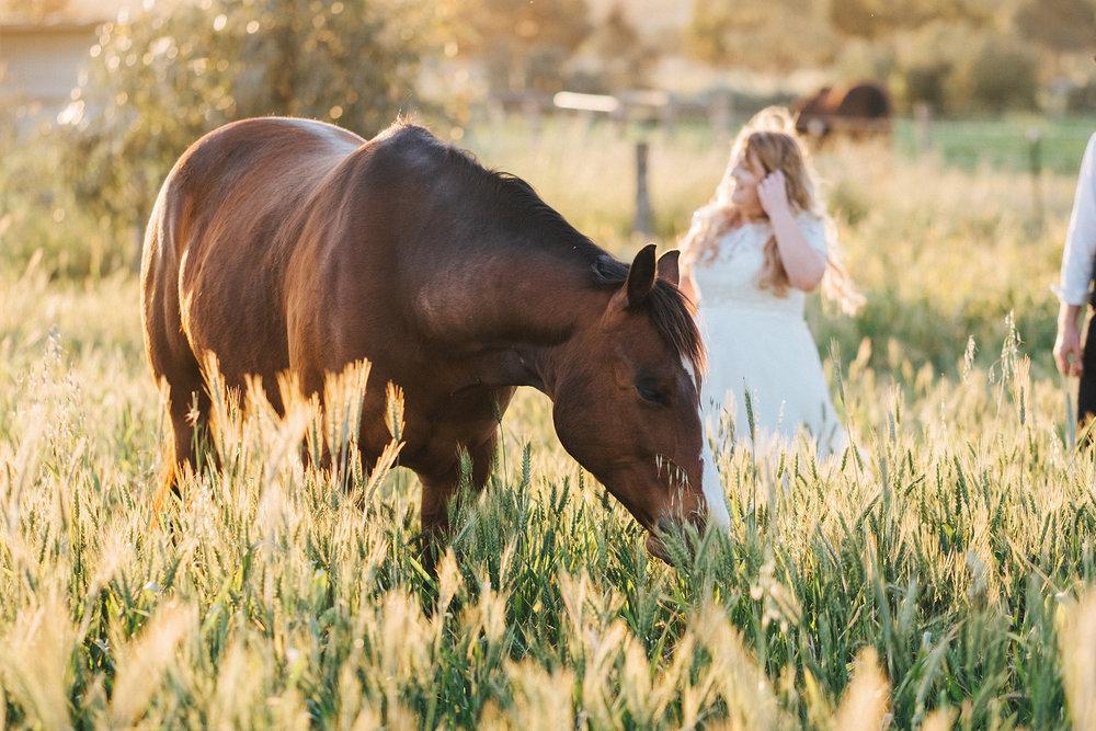 Bridal Portraits Horses 031.jpg