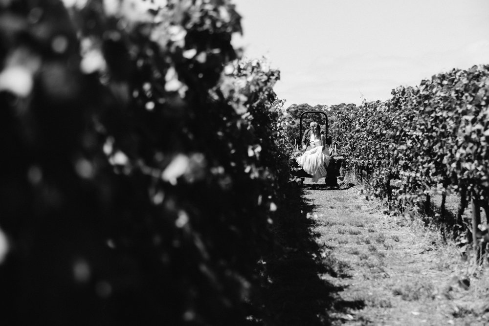 australia-day-backyard-vineyard-wedding-22.jpg