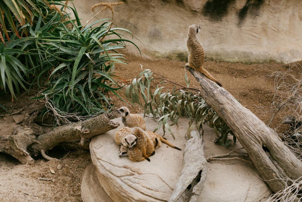 Adelaide Zoo Wedding in the Rain 072.jpg