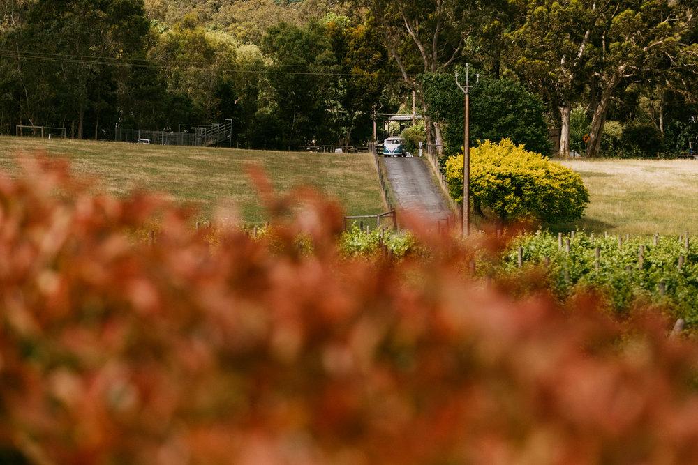 Maximillian Wedding Adelaide Hills 036.jpg
