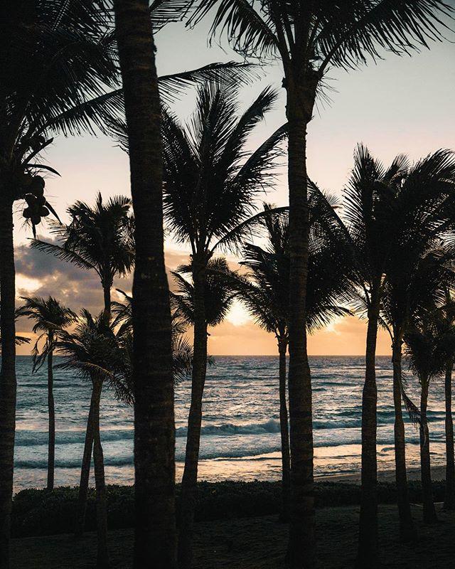 paradise. 🌴