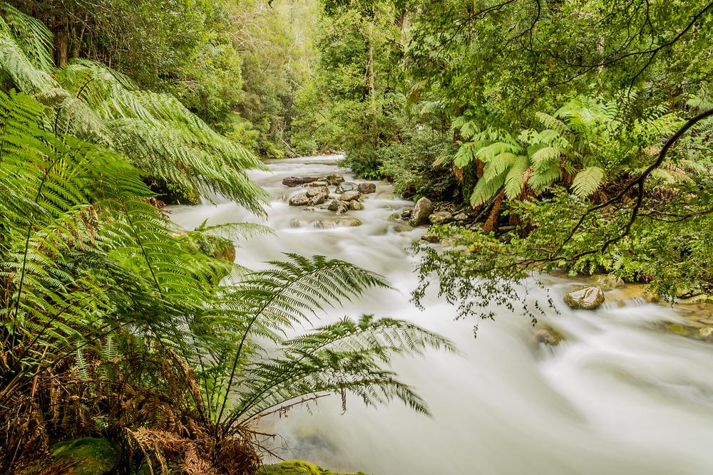 Liffey River - Tasmania - Wilkography