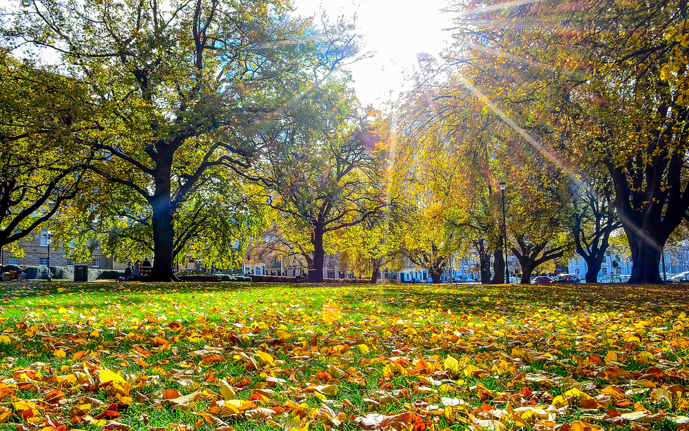 Parliament Lawns In Autumn - Tasmania - Wilkography