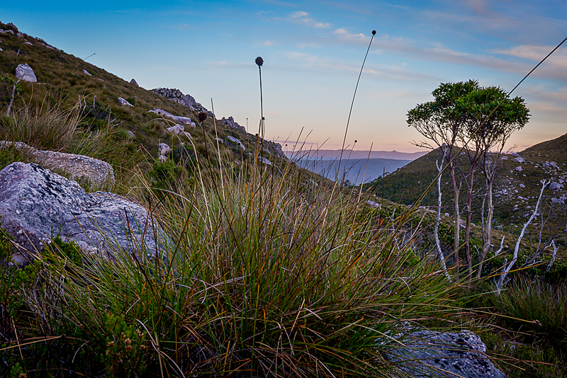 Button Grass Sunset - South West Tasmania - Wilkography
