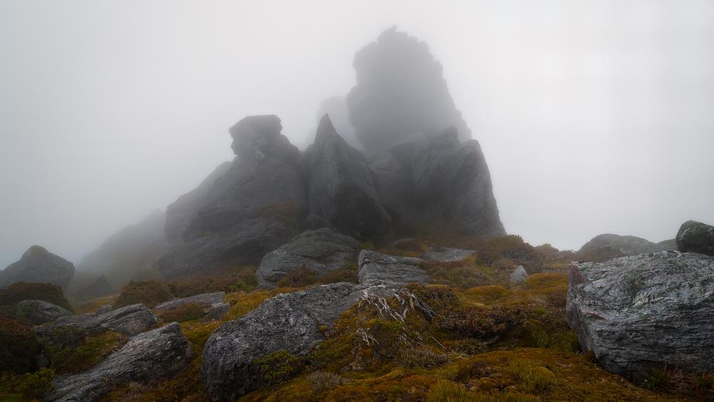 Tasmanian Photography - Arthurs Garden - WILKOGRAPHY.jpg