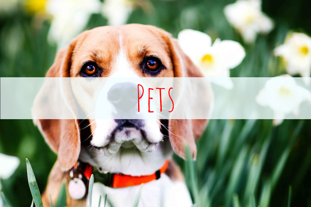Pet photography sussex