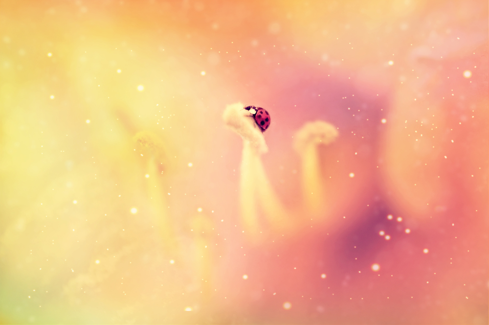 ladybug final.jpg