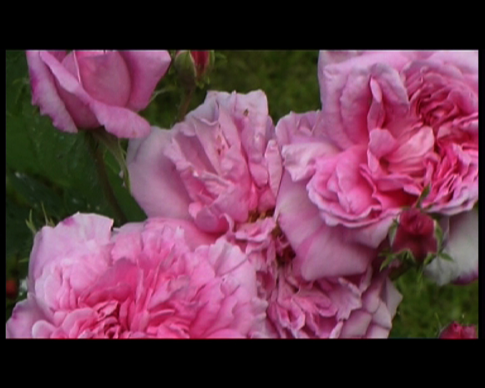 22 Isfahan mon amour-rose.jpg