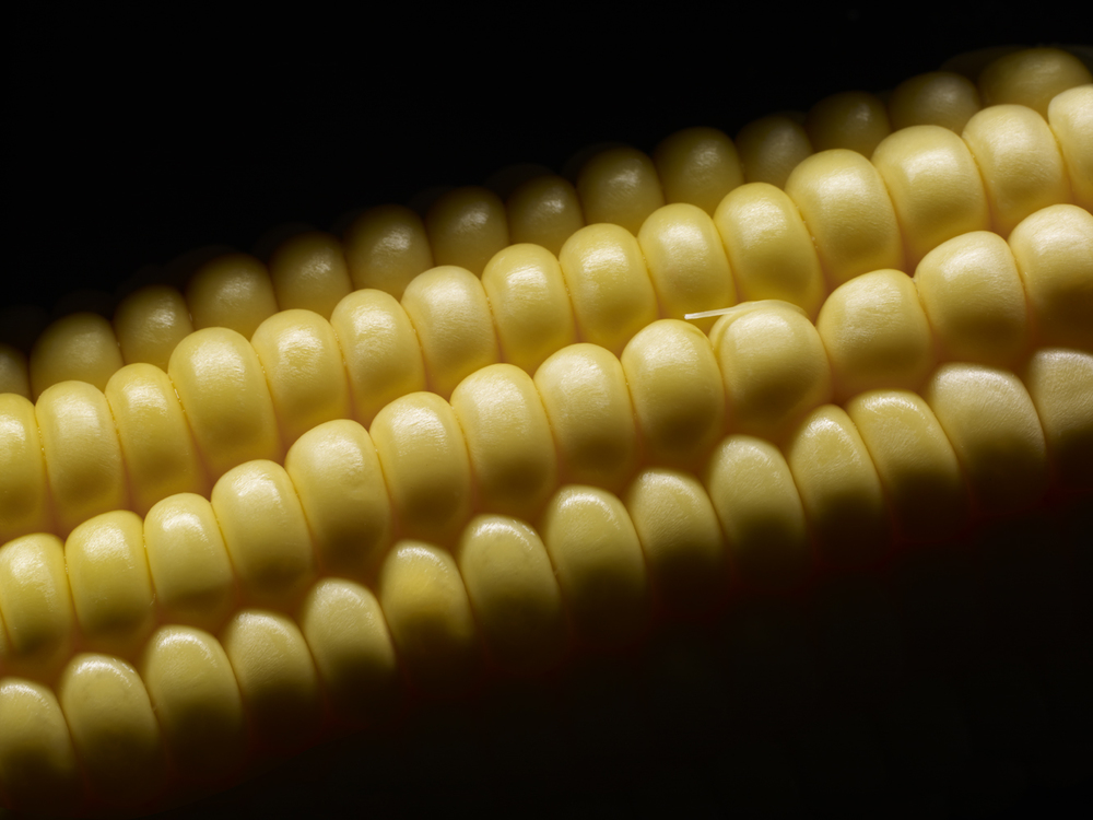 Sweetcorn on cob