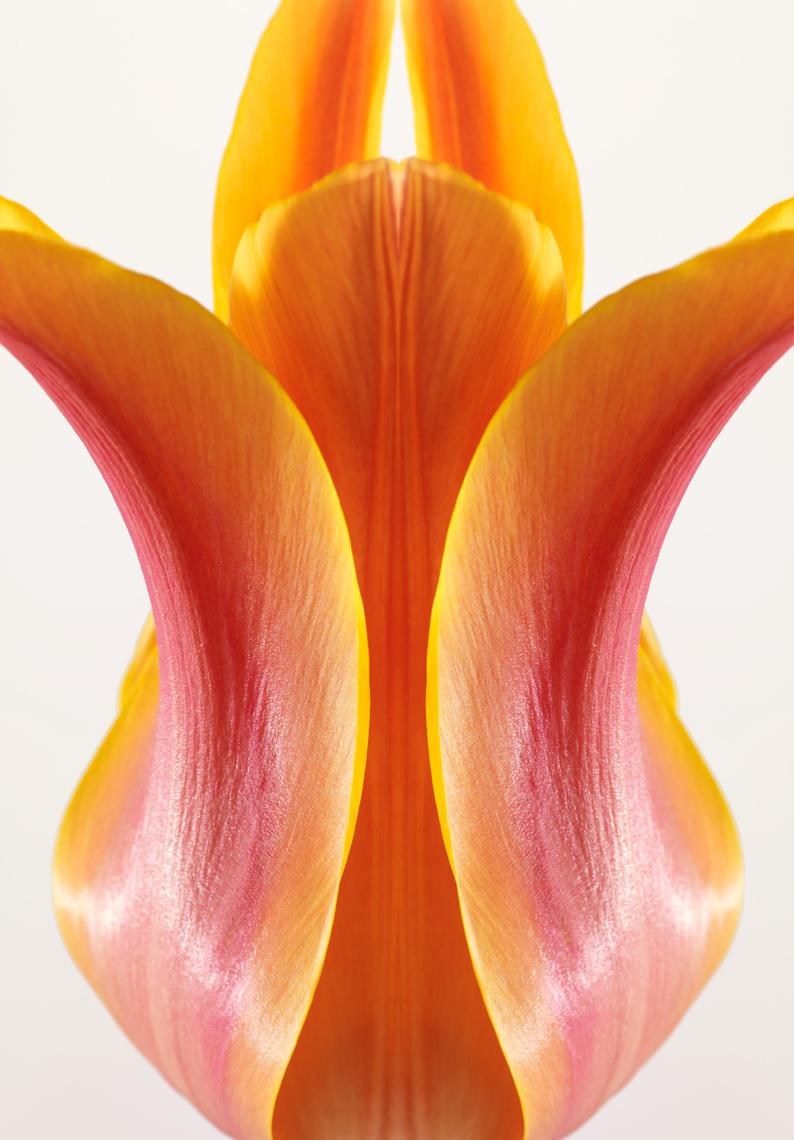 Tulip Ballerina, symmetry