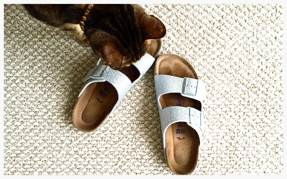 Simone reviews my latest shoe purchase. Silver Birkenstock sandals. Yep, this is happening.