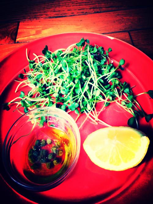 radishsproutsalad