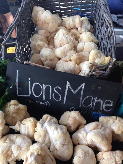 lionsmanemushrooms