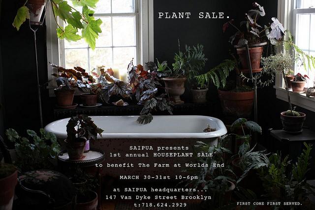 saipua plant sale