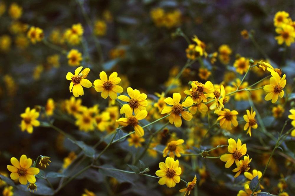 Flowers San An.jpeg