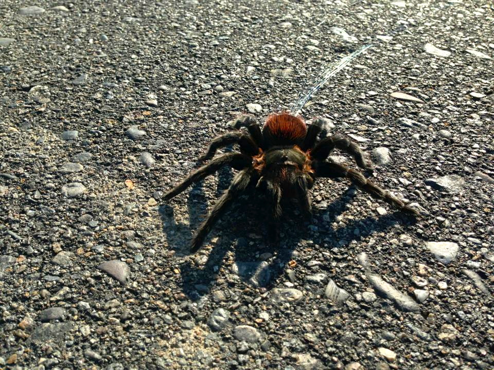 We saw this little guy shooting webs at our breakdown site