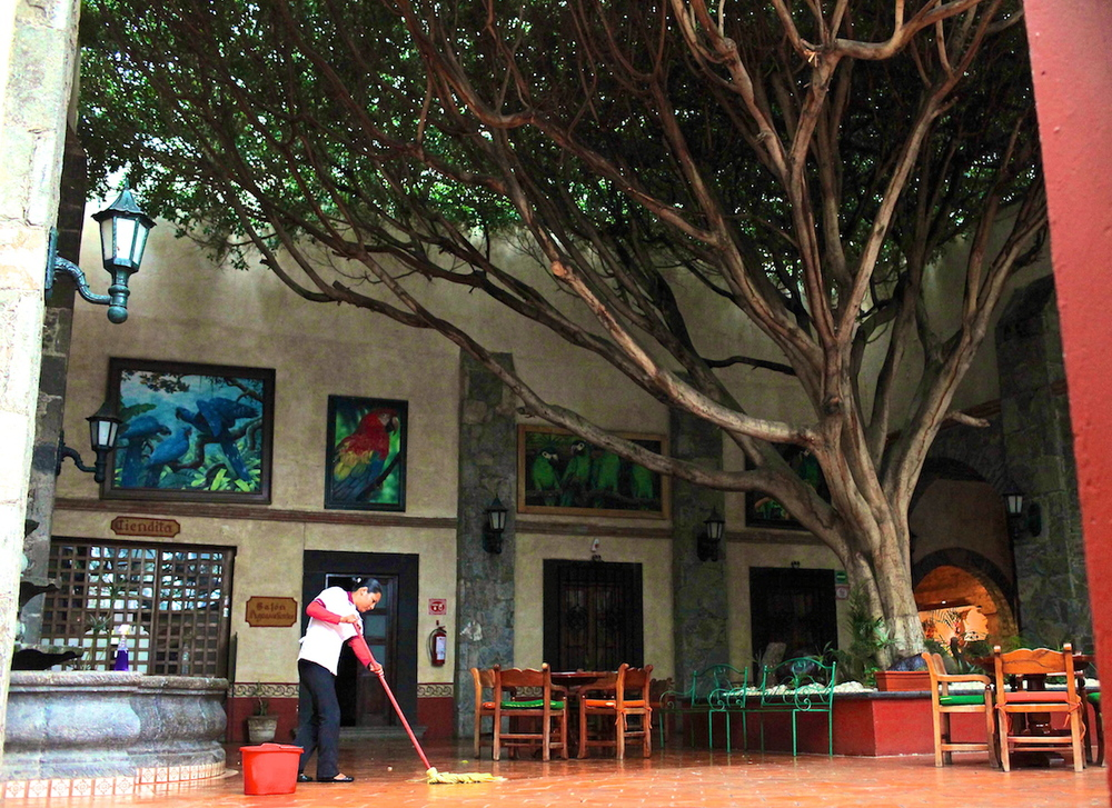 Trees growing inside the Misión San Gil