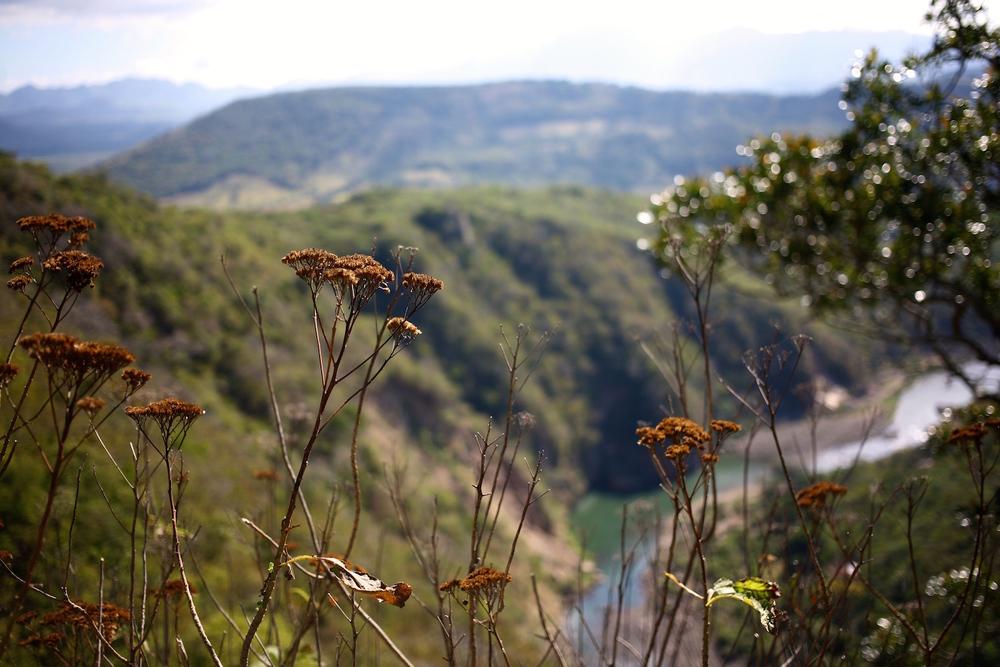 14 Flowers Somoto Canyon.jpeg