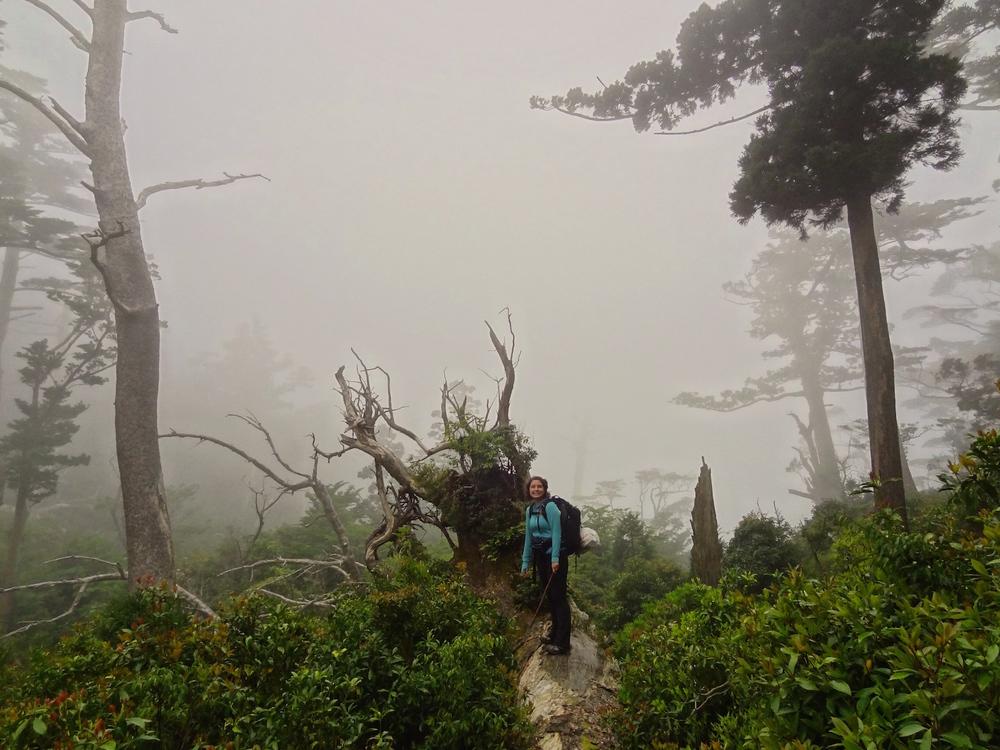 Ash in Fog.jpg