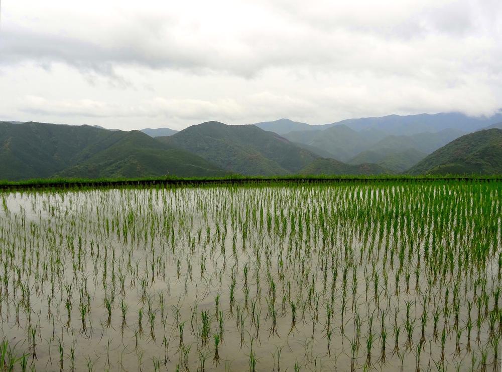 Rice field in Takahara