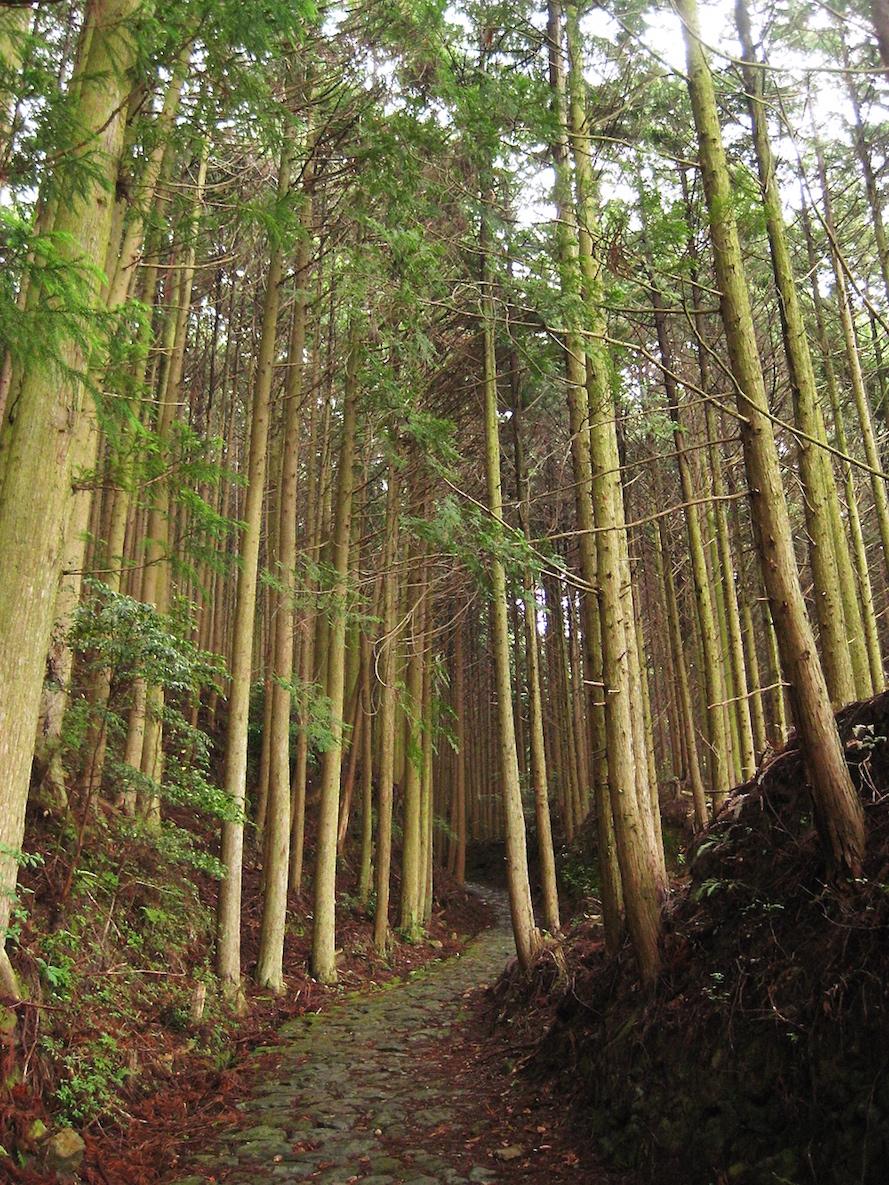 Woods on Kumano Kodo Hike between Takaharaand Jujo-oji