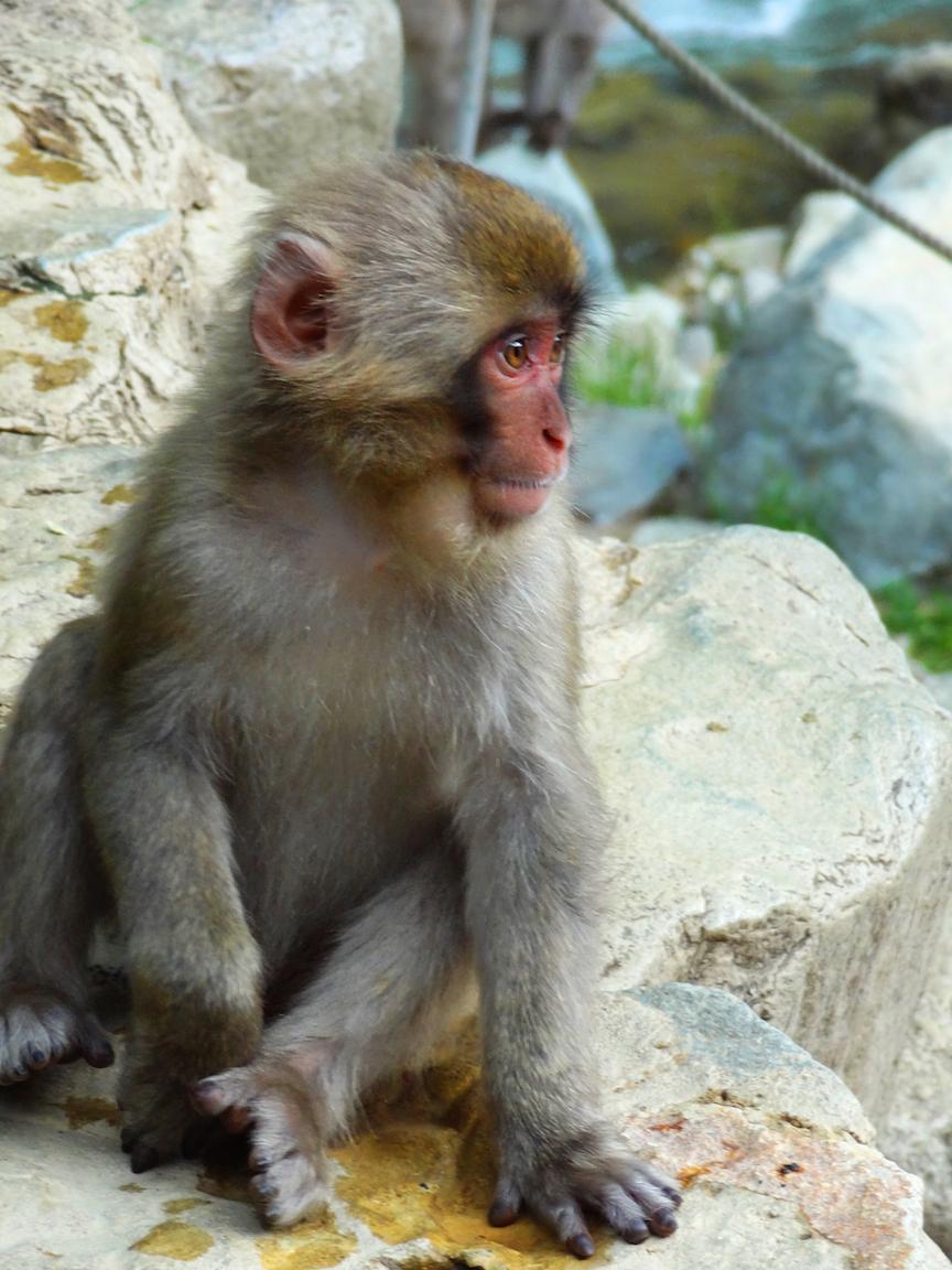 Monkey PS small.jpeg