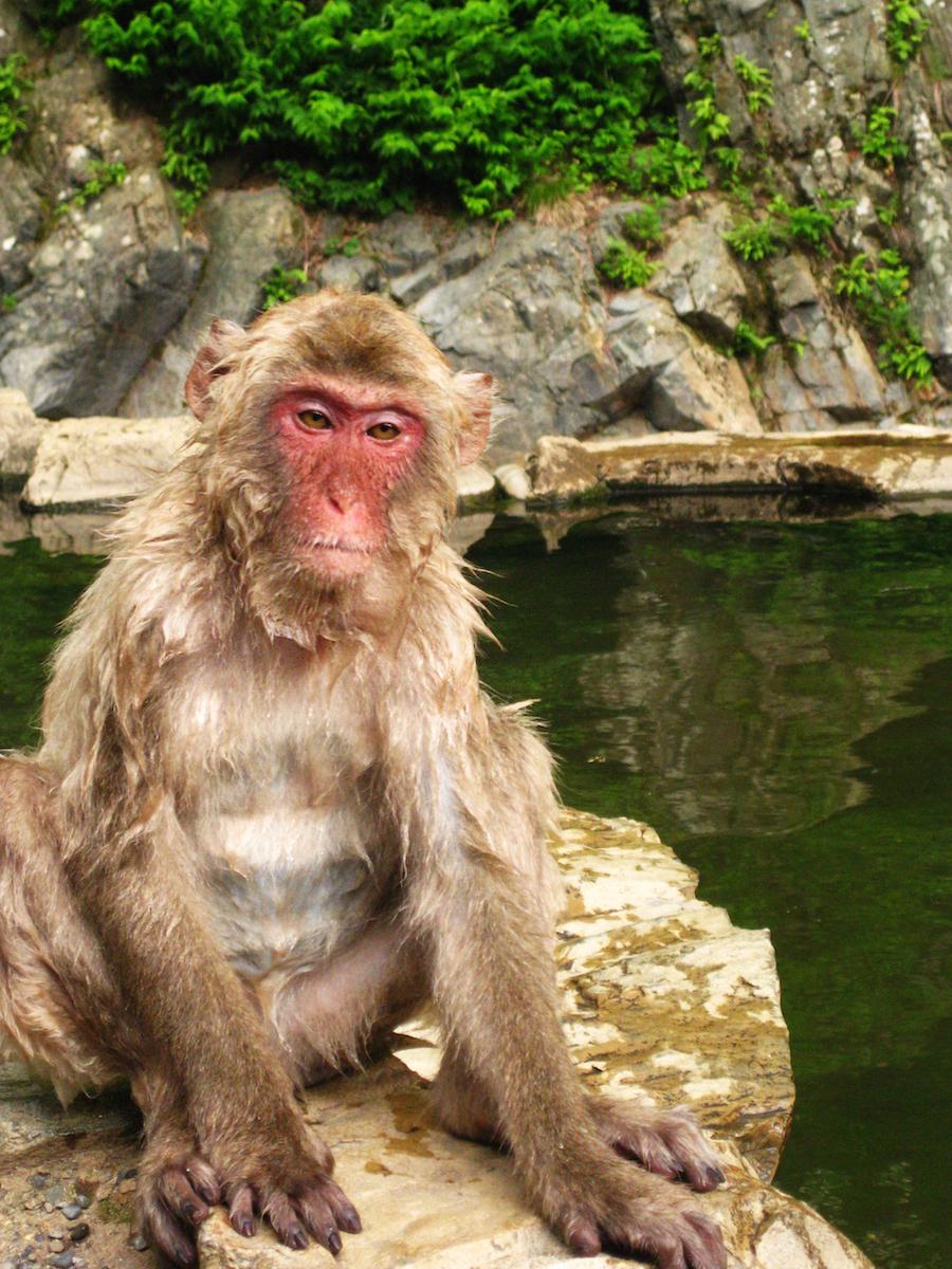 Wet Monkey PS small.jpeg