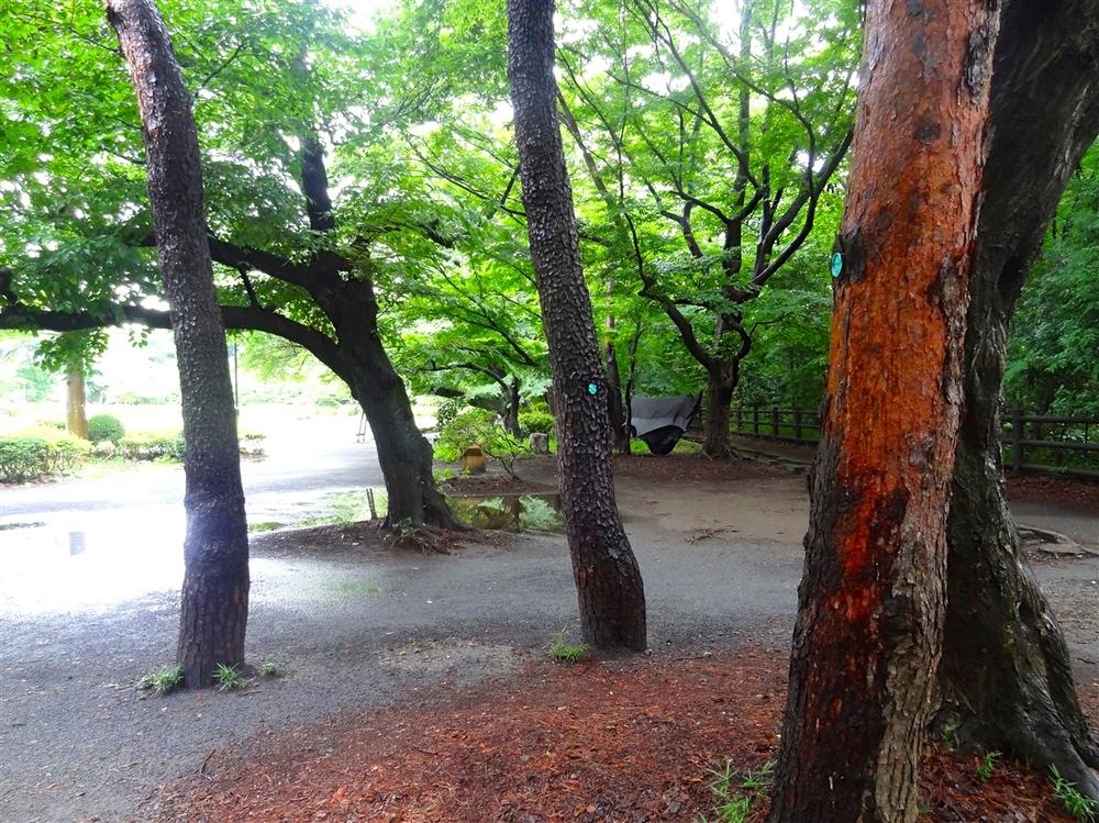 Nubéand Hammocks in Mitaka, Tokyo Inokashira Park