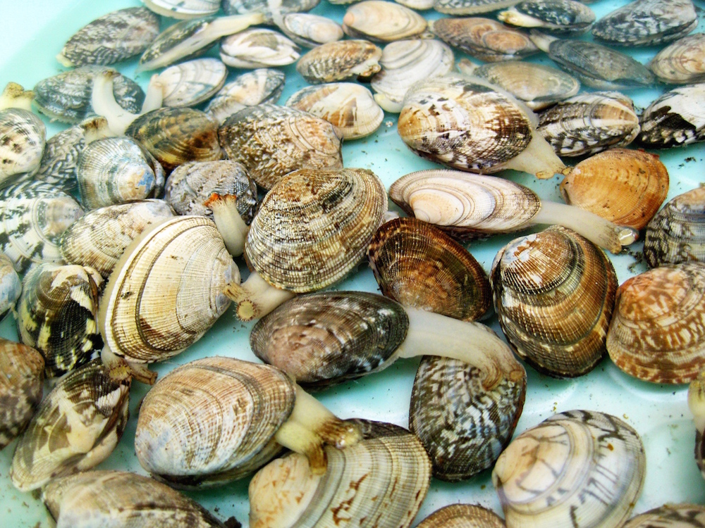 Clams!.jpeg