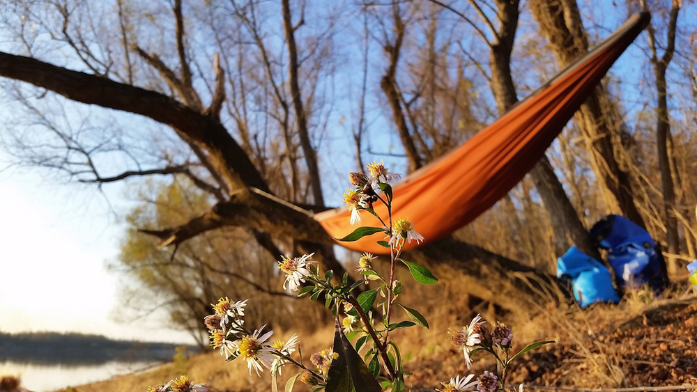 Flowers in December with Ginger Rock Pares Hammock in the background