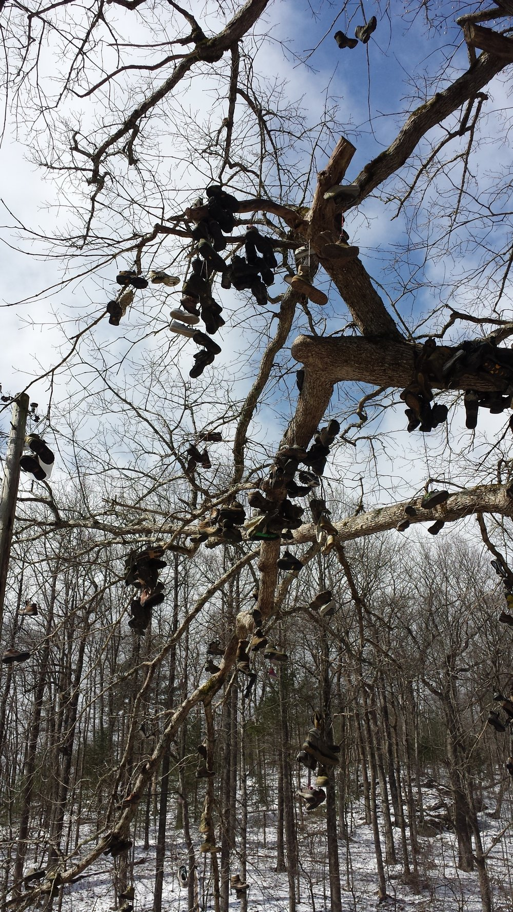"The ""tree where hiking shoes go to die"" outside of an outfitter in Neal's Gap, Georgia."