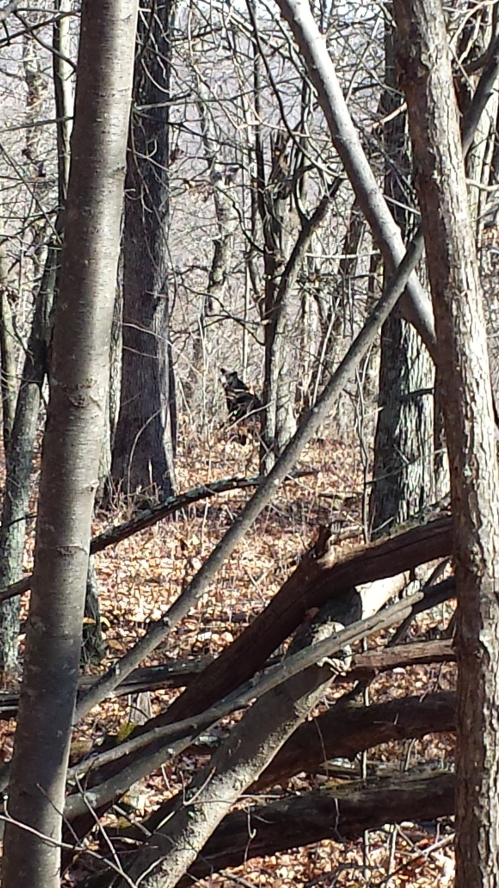 """In the misty Shenandoah Valley of Virginia, Chad """"Octo"""" Haynes caught a glimpse of the only bear he would see during his whole trek- a rangy black bear."""