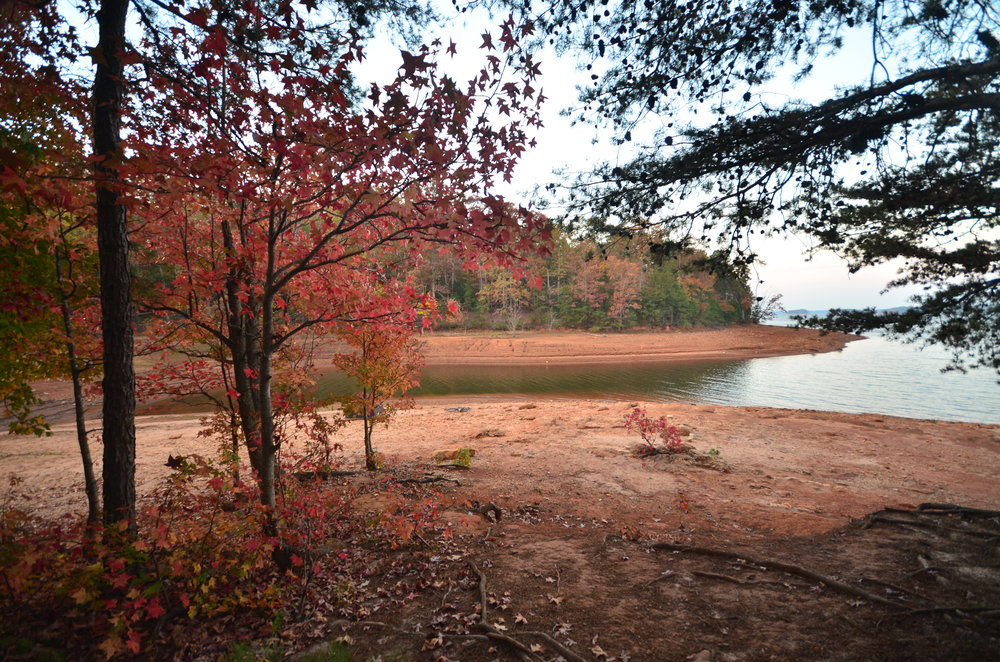Angela Oliver enjoys the beauty of the season at Sadler's Creek State Park in South Carolina.