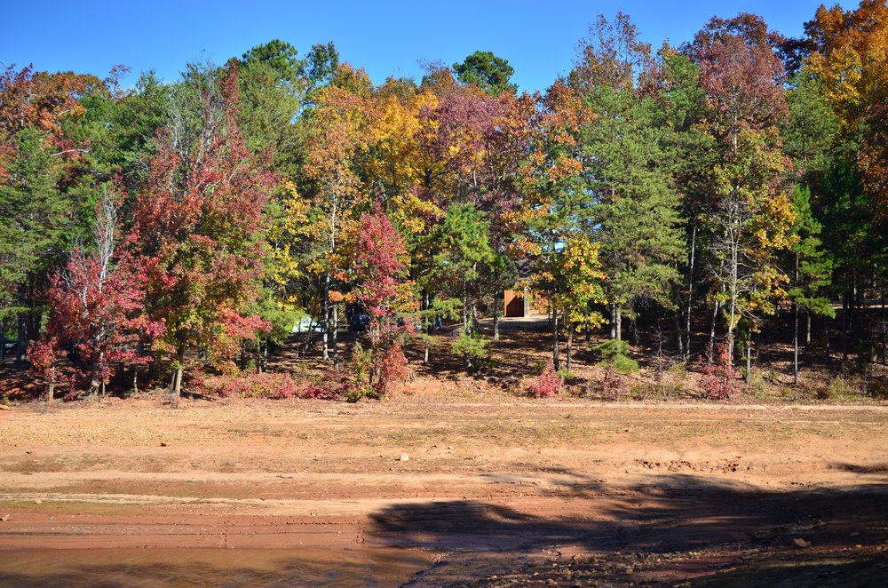 A view of the dazzling variety of colors offered by the foliage of Sadler's Creek State Park in South Carolina.