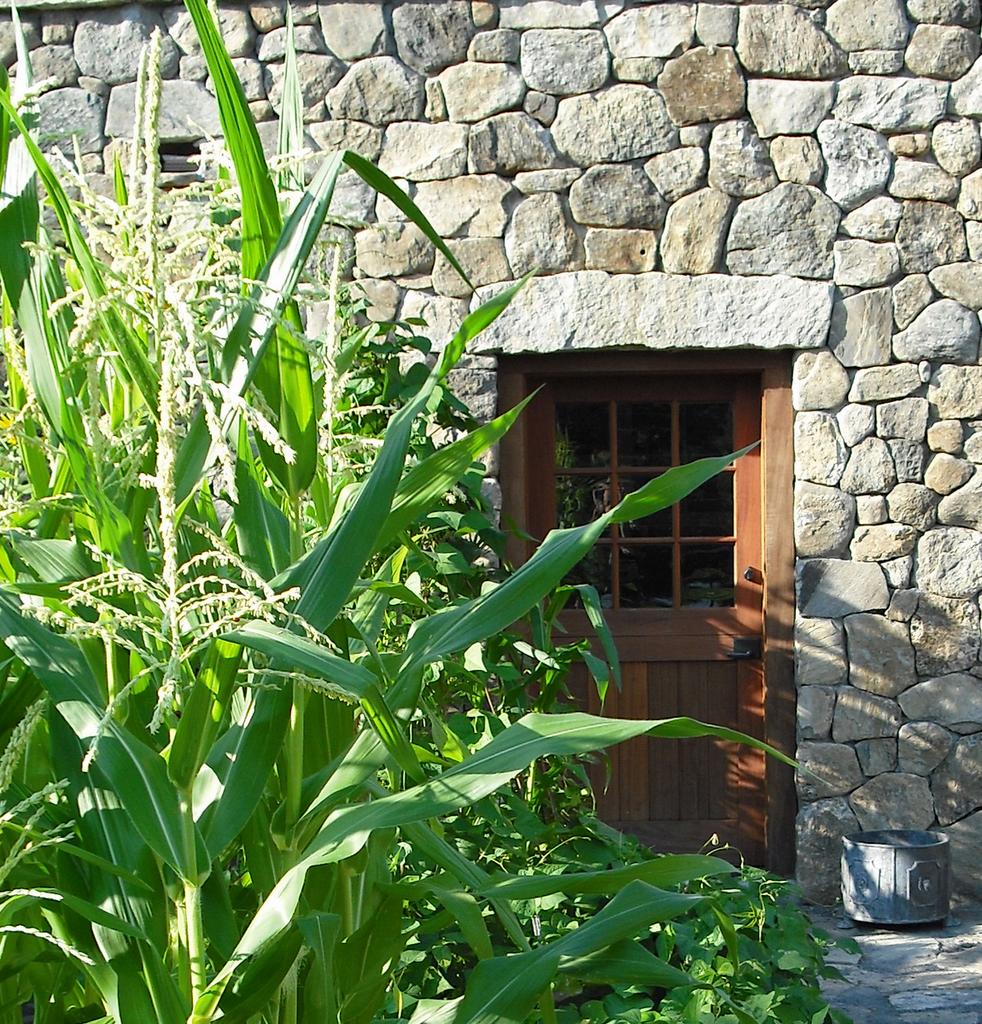 vegetablegarden.jpg