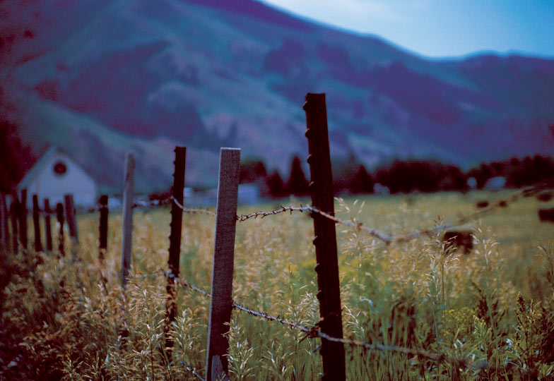 Rustic Fence Line