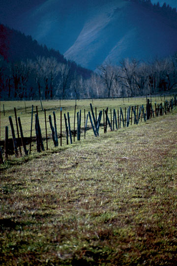 Rustic Fence Line 2