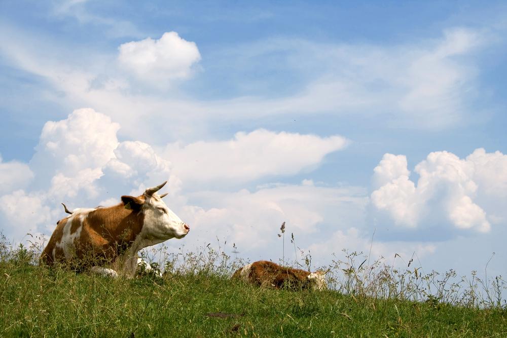 Verantwortung für Mensch und Tier bestimmt unser Handeln seit über 30 Jahren