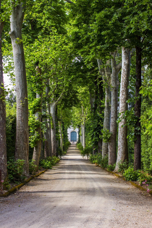 A Peaceful Road — Boboli Gardens, Florence