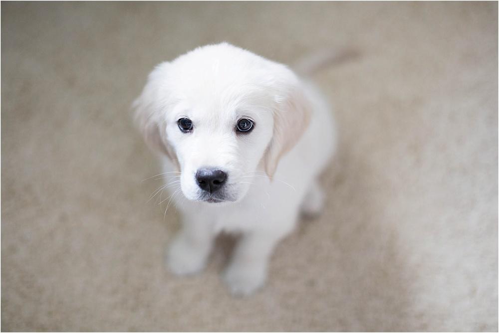 Puppy Photos | Ashley Powell Photography | Roanoke, VA