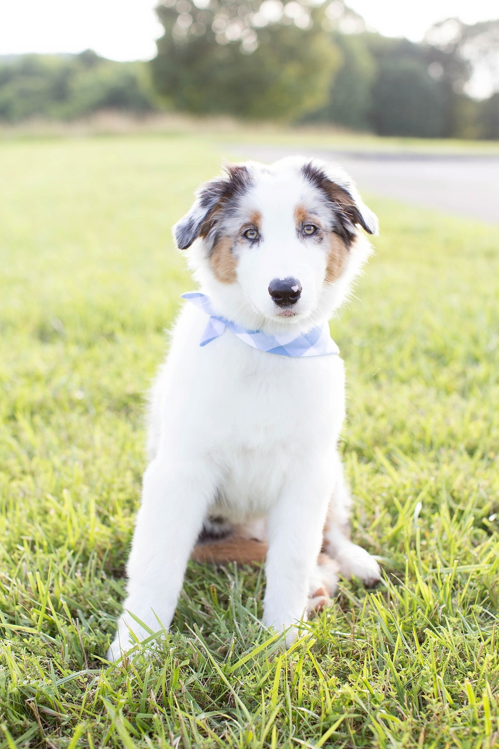 New Puppy Session | Ashley Powell Photography | Roanoke, VA