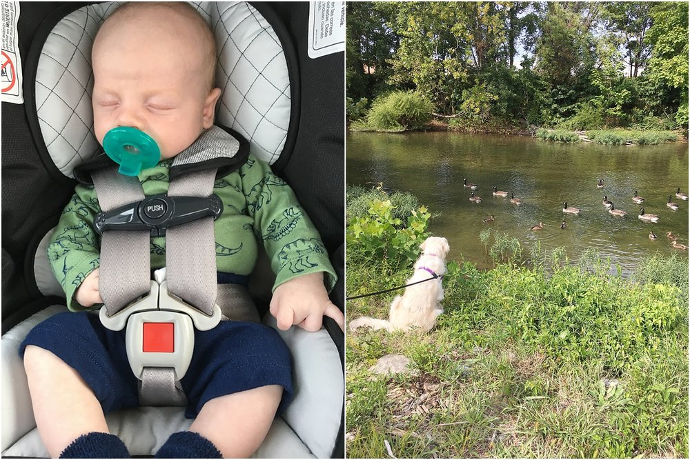 Jack's first walk & Ellie Mae trying to make friends with the geese! ;)