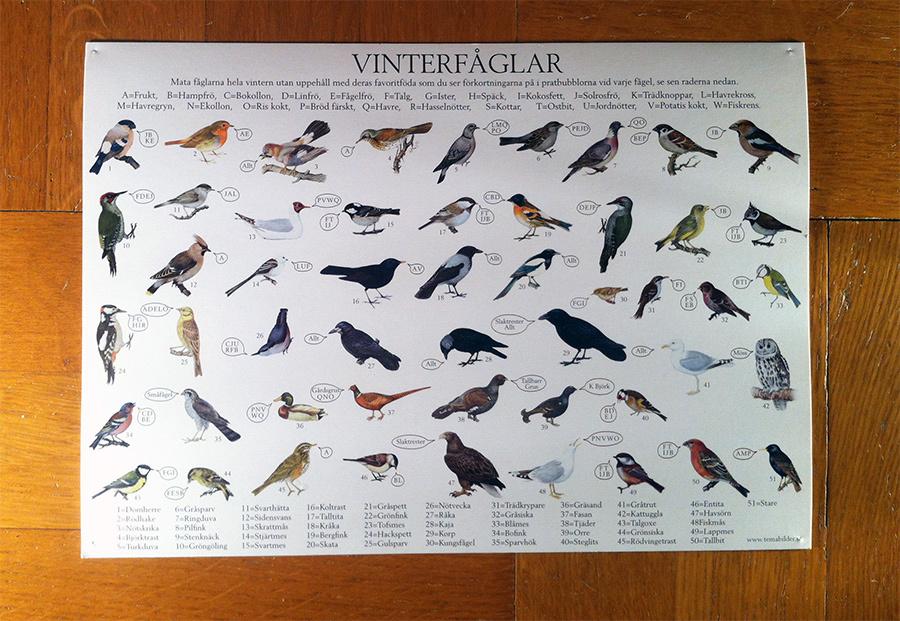 Vykort som visar vinterfåglar och vad de äter