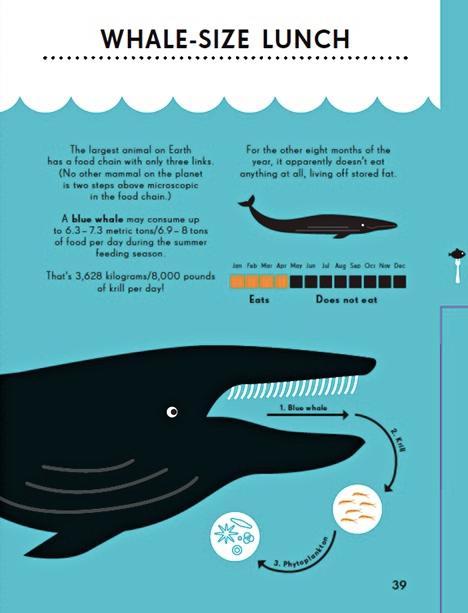 Bild om valar från boken Animal Kingdom