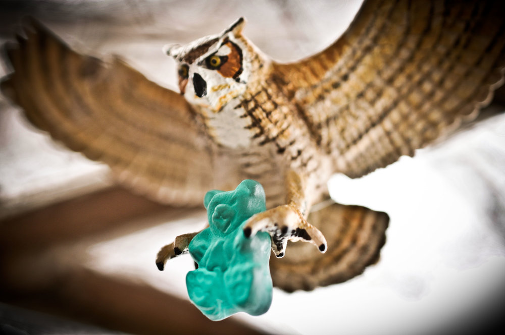 gummy and owl-2.jpg